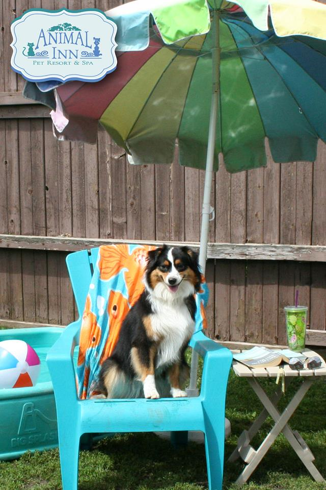 Dog Daycare Near St Paul Animal Inn Pet Resort Lake